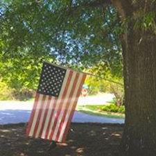 American flag on a tree